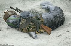 Here is a seal with an assault rifle.