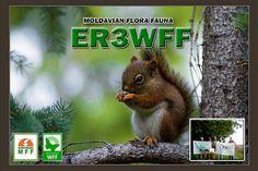 QSL карточки | MFF44 ER3WFF