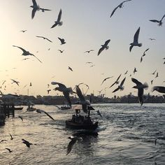 Literally hundreds of seagulls!!