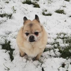 Cute Pomeranian mix dogs are the favorite choice of pets, and there are so many of these mixed breeds to choose so with this article, your search will be a lot easier. Pomeranian Facts, Cute Pomeranian, Pom Dog, Dog Crossbreeds, Dog Seat, Basic Dog Training, Puppy Care, Dog Travel, Cute Creatures