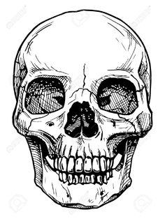 Vector black and white illustration of human skull with a lower. Vector black and white illustration of human skull with a lower.,Kunst Vector black and white illustration of human skull with a lower jaw. Illustration Tattoo, Ink Illustrations, Drawing Sketches, Art Drawings, Drawing Ideas, Drawings Of Skulls, Drawing Tips, Tattoo Drawings, Tattoo Flash