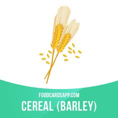 Barley is used for malt production, which is main ingredient of beer and whiskey.  #english #englishlanguage #learnenglish #studyenglish #language #vocabulary #dictionary #englishlearning #vocab #food #cereal #barley