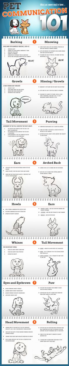 Pet Communication Infographic