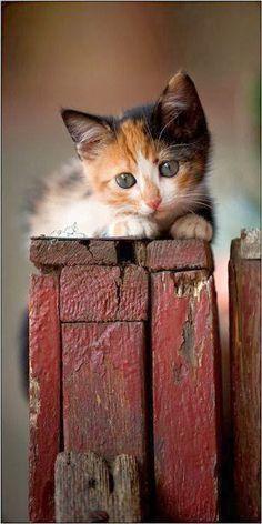 Kittens: So Precious! <3
