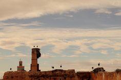 Cigueñas en lo alto de Marruecos