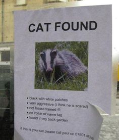 """Funny """"Cat Found"""" Poster."""