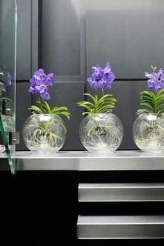 vanda decoration