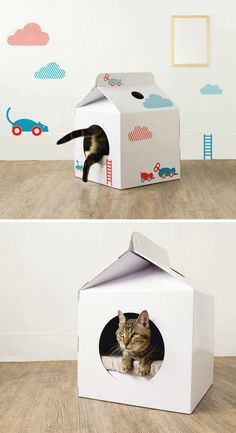 Cat house in a milk carton