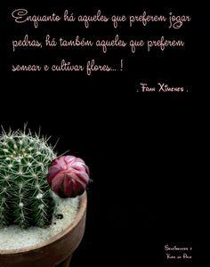 Foto: ╭ღ🍃🌸 ღ╯ Que o dia seja Lindo... Florido e de Paz ╭ღ🍃🌸 ღ╯ Good Morning Gif, Yellow Roses, Cactus, Good Morning Wishes, Goal, Growing Up, Positive Quotes, Flowers, Life