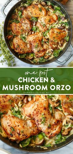 The easiest pasta recipe one can ask for! All cooked in one pot with the juiciest, golden-brown chicken thighs, mushrooms, and baby spinach, this amazingly creamy orzo is too good to pass up. Feel free to change up the ingredients! Enjoy this main dish for dinner! Easy Pasta Recipes, Best Chicken Recipes, Easy Meals, Dinner Recipes, Cooking Recipes, Healthy Recipes, Dinner Dishes, Food Dishes, Main Dishes