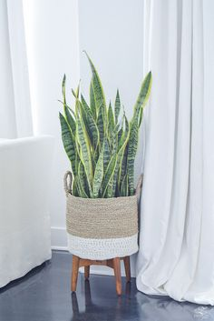 snake plant mother in laws tounge in basket modern design mid centry modern plant stand-1
