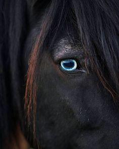 Cute Horses, Pretty Horses, Horse Love, Black Horses, Wild Horses, Dark Horse, Horse Photos, Horse Pictures, Most Beautiful Horses