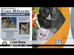 Win For Life, Cat City, Twin Cities, Minnesota, Places To Visit, Live, Ranger, Youtube, Iron