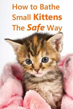 Cat Nutrition Facts How To Bathe Small Kittens The Safe Way - Tips that could save a kitten's life. Small Kittens, Baby Kittens, Kittens Cutest, Cats And Kittens, Caring For Kittens, Best Kitten Toys, Newborn Kittens, Siamese Cats, Cat Care Tips