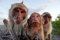Animal Family Photos | Cute Pictures of Groups of Animals