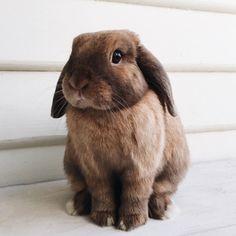 graceinchrist:  Colin.  Plus de découvertes sur Le Blog des Tendances.fr #tendance #cute #animaux #blogueur