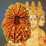 Rudraksha Beads Buy Rudraksha