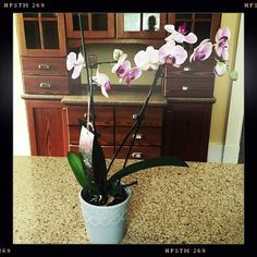 5.10.15 * A Peek Into The Life (Mother's Day Edition) | Flowers for Mother's Day are always a good idea. | Orchid | Took It To The New House | Pretty | Garden | Green Thumb | Bonus Daughters | Photography |