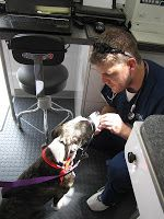 Why use a mobile Vet?                           Because you love your pet!