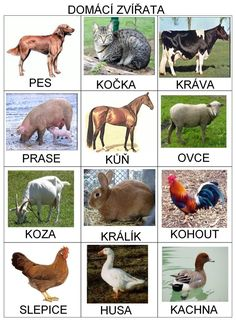 Animals - in Czech Preschool Themes, Montessori Activities, Infant Activities, Toddler Class, Toddler Toys, Farm Animals, Animals And Pets, Kindergarten, Learning