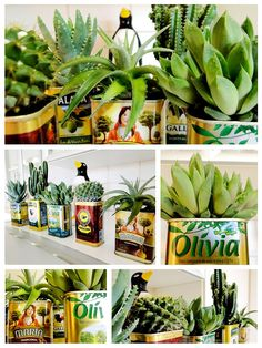 Using olive oil cans as pots