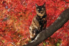美術館「えき」KYOTO 岩合光昭写真展 ねこの京都 Cats in Kyoto