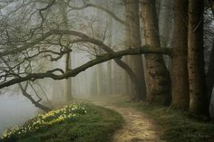 Photo by Nelleke Pieters Photography From myceltichearth.tumblr.com