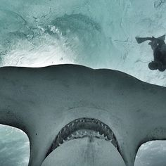 GoPro Awards is calling on content creators to submit their best gopro videos, clips, and photos. Action Photography, Underwater Photography, Shark Art, Cute Shark, Hammerhead Shark, Water Life, Shark Week, Underwater World, Sea Creatures