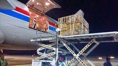 """""""O GRITO DO BICHO"""": Exportação de gado vivo por aviões - RN  #ogritodobicho #falabicho"""