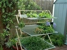 Dry herbs on a wooden drying rack with 3 old window screens.