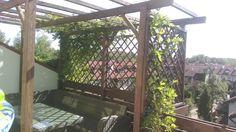 Pergola na słonecznym tarasie obrasta glicynią, będzie doskonałą ochroną przed słońcem