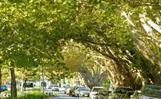 Tree Planting and Selection - City of Port Phillip Website
