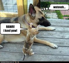 Funny Picture Clip: Funny dog pictures with words   Funny Dog Pictures With Captions