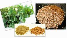 Avantages pour la santé des graines de fenugrec