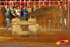 torodigital: El ganado de La Paloma satisface en Betxi