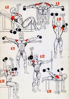 musculation-epaules2-img.jpg (570×811)