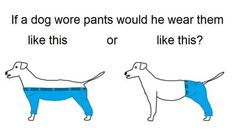 Does it need to cover the b-hole? People on the internet have strong opinions on how a dog would wear pants.