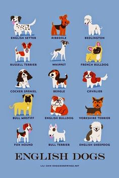 English Dog breeds