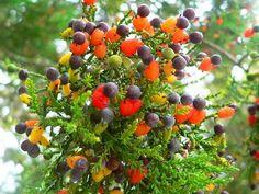 Sim, você leu direito: graças a este homem, uma única árvore é capas de dar 40 frutos diferentes, todos ao mesmo…