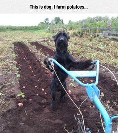 Farmer At Work