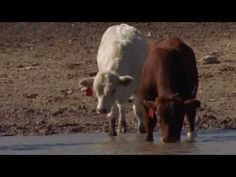 Video about Temple Grandin - the HBO movie