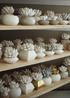 cement succulents by Waterstone Succulents