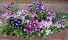 Minha jardineira Foto : Cida Werneck