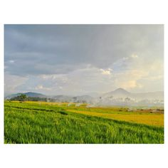 """Gemah ripah loh jinawi toto tentrem kerto raharjo""  . ""Kekayaan alam yang berlimpah dan keadaan yang tentram"" . . . . . . . #exploreIndonesia #explorewestsumatera #vscocam #indonesia #nature #adventure #traveling #wanderlust #traveler #photography #teamNIKON #pesonaIndonesia #WonderfulIndonesia #NikonIndonesia #Nikon #landscape #landscapephotography #landscaper #naturephotography #IndonesiaTourism #IndonesiaLandscape #NikonAsia #pagaruyung  #VisitSumbar #SumbarRancak #MinangTourism…"