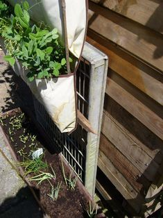 ''How to solve a problem like cats digging and toileting in the vegetable patch'''''', and growing veg in a very small garden. I needed a solution and the answer...