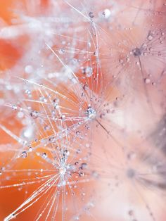 Frozen Dandelion Abstract Art  Macro by TinyDelicateWorld on Etsy, $15.00