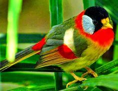 Guia jato.com: passaros silvestres