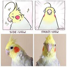 Funny Birds, Cute Birds, Cute Funny Animals, Cute Baby Animals, Funny Cute, Animals And Pets, Funny Animal Videos, Funny Animal Pictures, Animal Memes