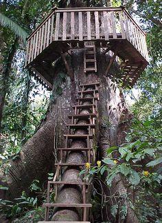 Treehouse access and roundwalk - Tree house - Wikipedia, the free encyclopedia