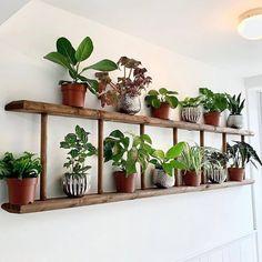 Indoor Plant Shelves, Indoor Plant Wall, Indoor Planters, Indoor Garden, Plant Ledge Decorating, Porch Decorating, House Plants Decor, Plant Decor, Plant Ladder